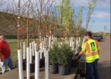 Trees Given Away for Arbor Day